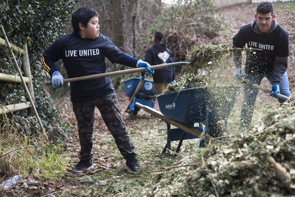 Edwin Duenas, 11, from the YMCA My Achiever Program, shovels mulch into a wheelbarrow during a service day in recognition of MLK Day at Jennings Park on Monday in Marysville. (Daniella Beccaria / The Herald)