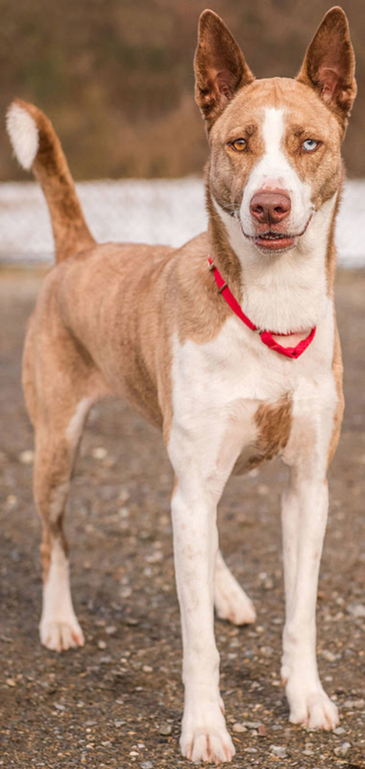 Dogs For Adoption Shelter In Troble