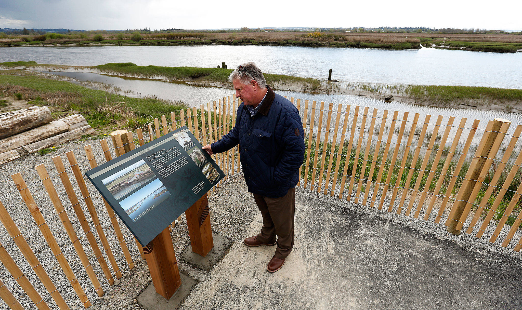 Jim Ballew, Marysville's parks and recreation director, looks at a new sign on the new Qwuloolt Waterfront Trail on Tuesday in Marysville The new trail runs from Ebey Waterfront Park to the Qwuloolt Estuary. (Andy Bronson / The Herald)