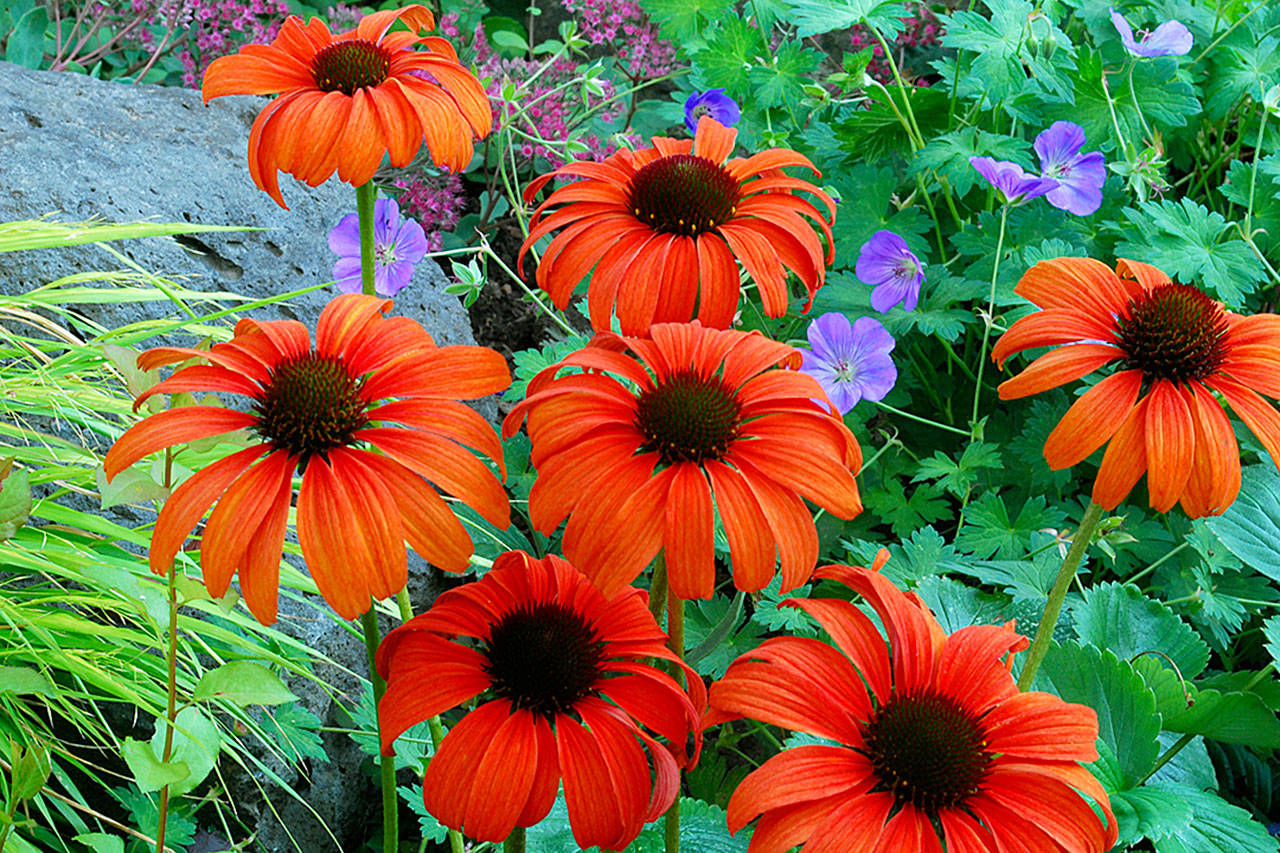 Orange flower power: Bright colors add boldness to a garden ...