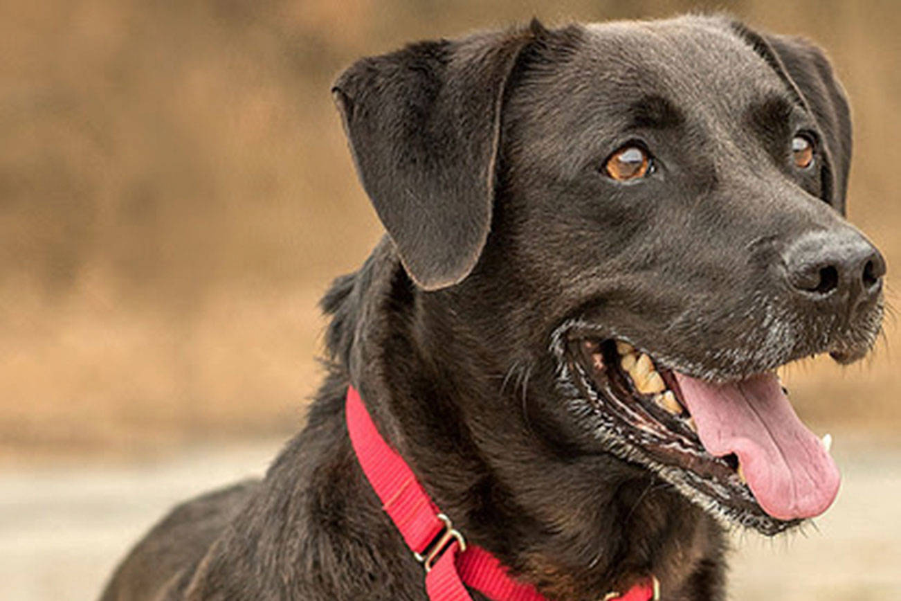 Find a dog to adopt from Everett Animal Shelter