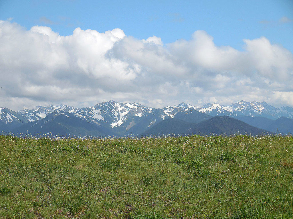 Hurricane Ridge offers panoramic view of the Olympic Mountains. (Olympic National Park)