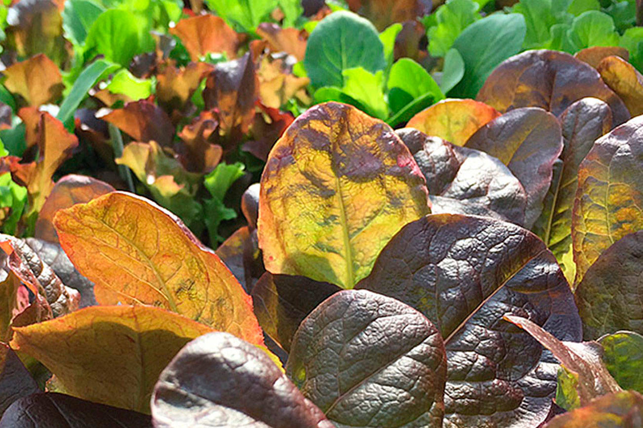 Now's the time: Here's how to plan for a fall vegetable garden
