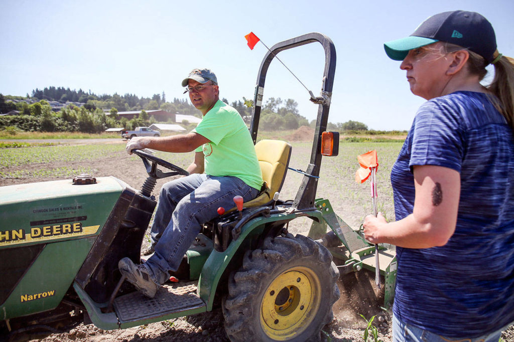 Darren and Georgina Carleton work to layout the corn maze Saturday morning at Carleton Farms in Lake Stevens on July 15, 2017. (Kevin Clark / The Herald)