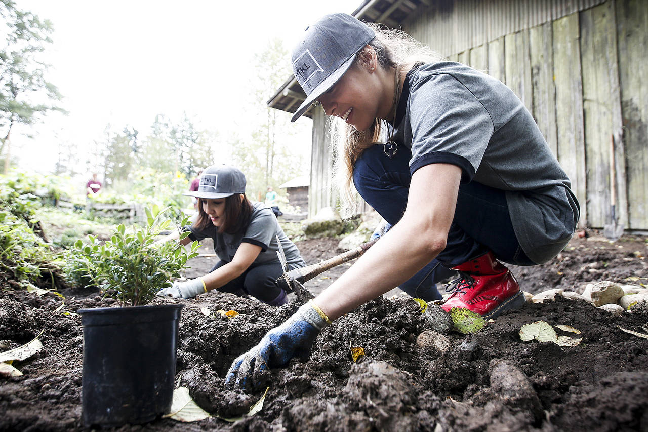 Mia Mulic (right) and Janice Rodriguez plant boxwood during a volunteer day at Farmer Frog in Woodinville on Saturday, Sept. 30. (Ian Terry / The Herald)