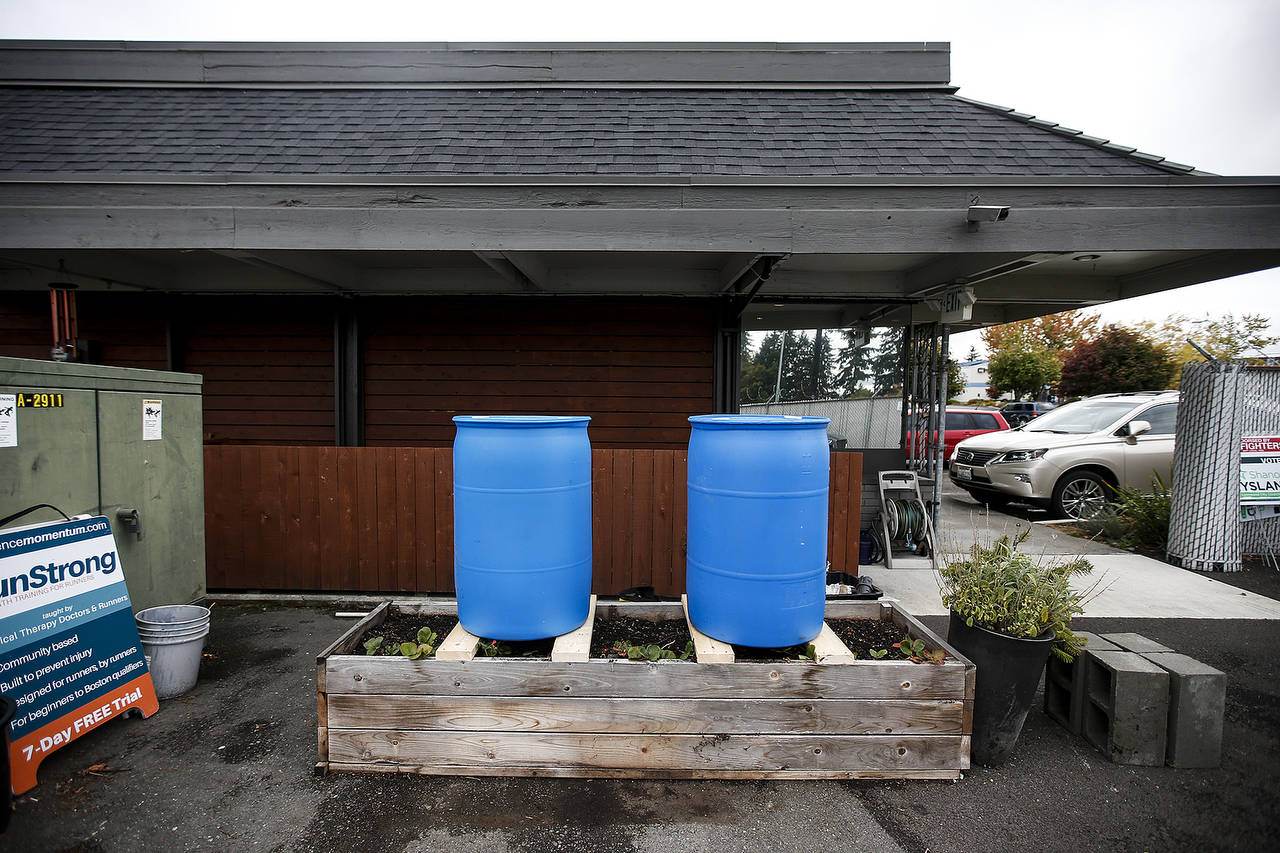 Rain barrels await installation at Experience Momentum in Lynnwood. (Ian Terry / The Herald)
