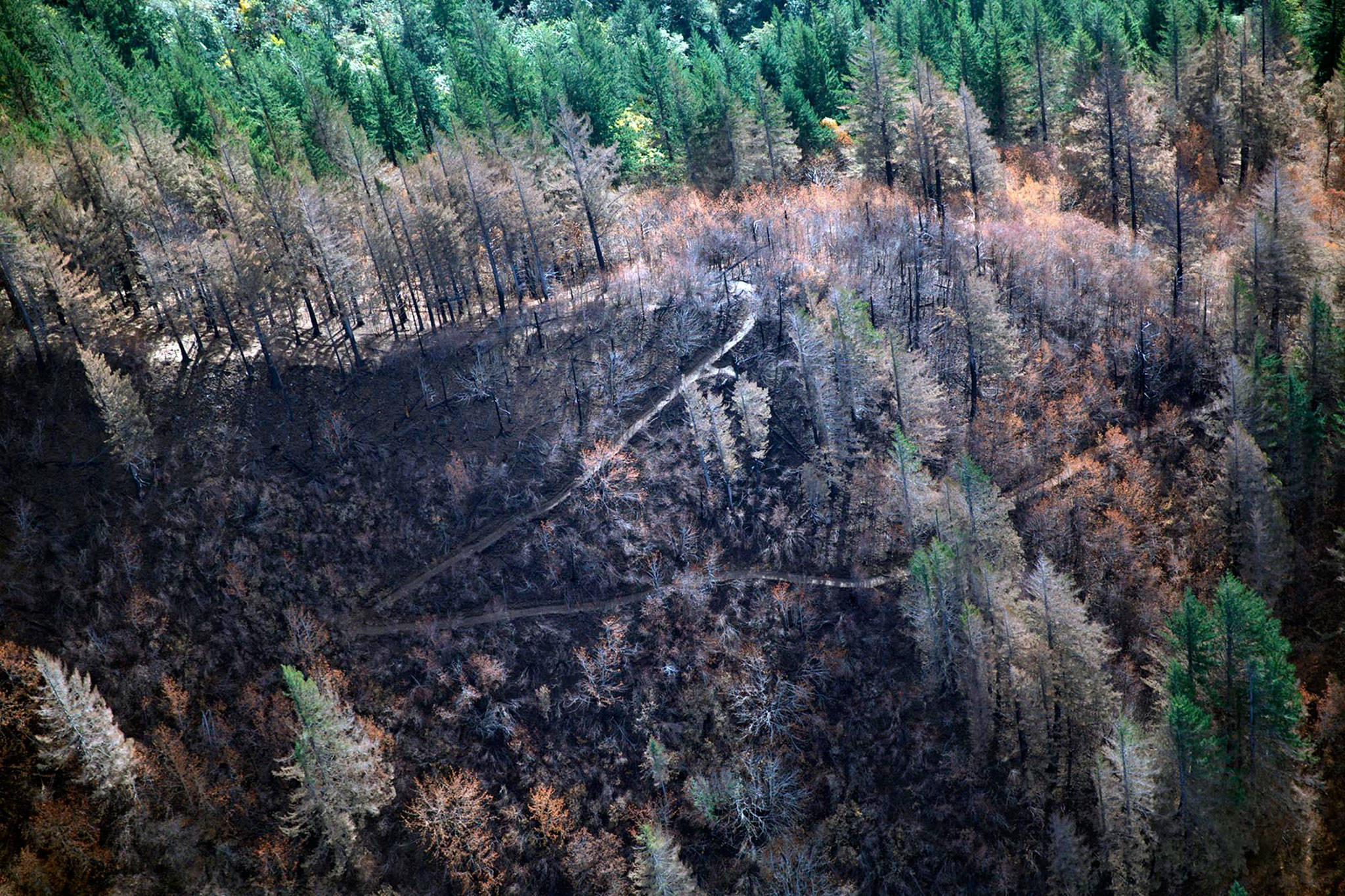 Image result for columbia river after fire