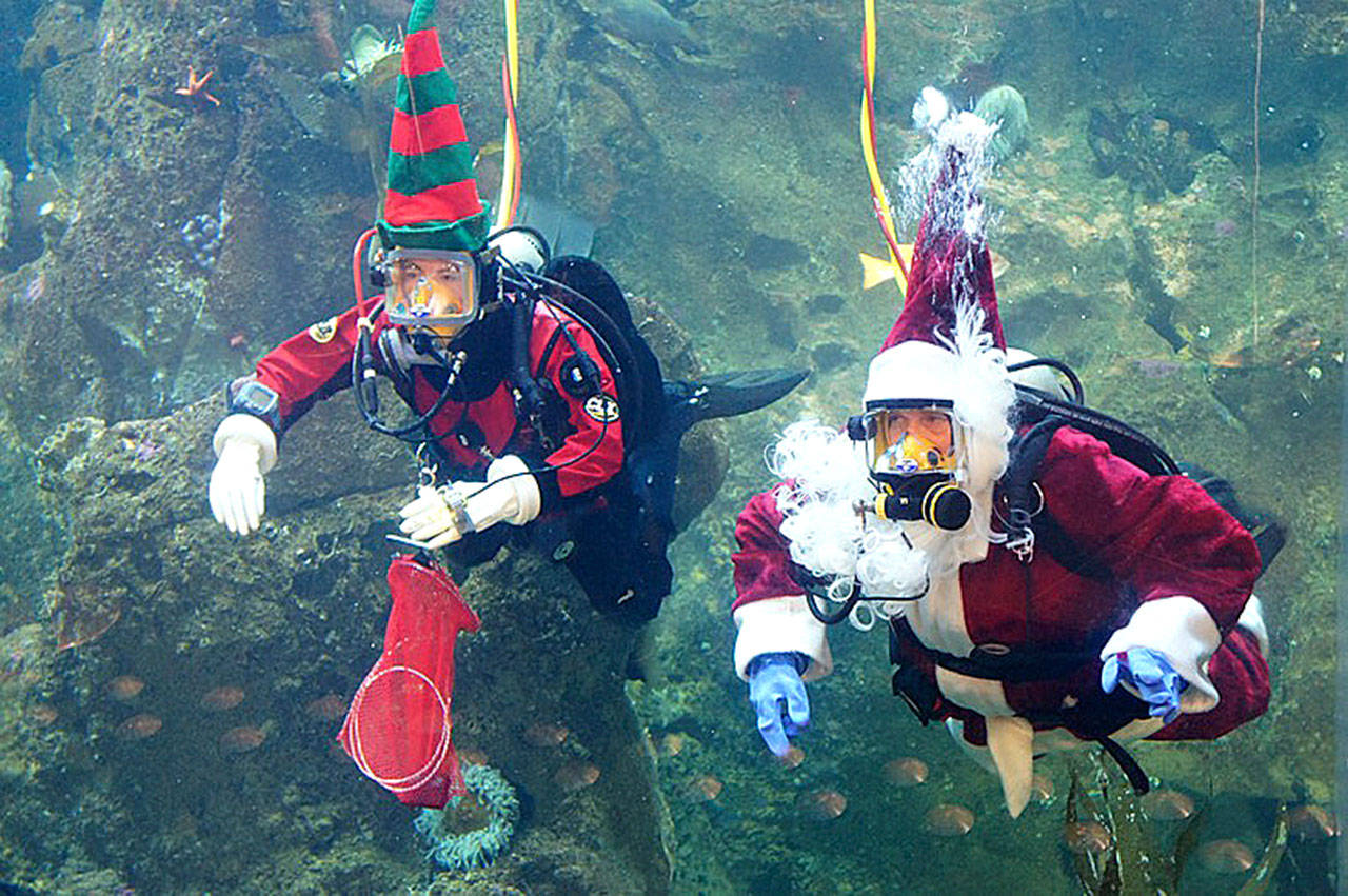 Santa and one of his elves take a dive at Seattle Aquarium. (Submitted photo)