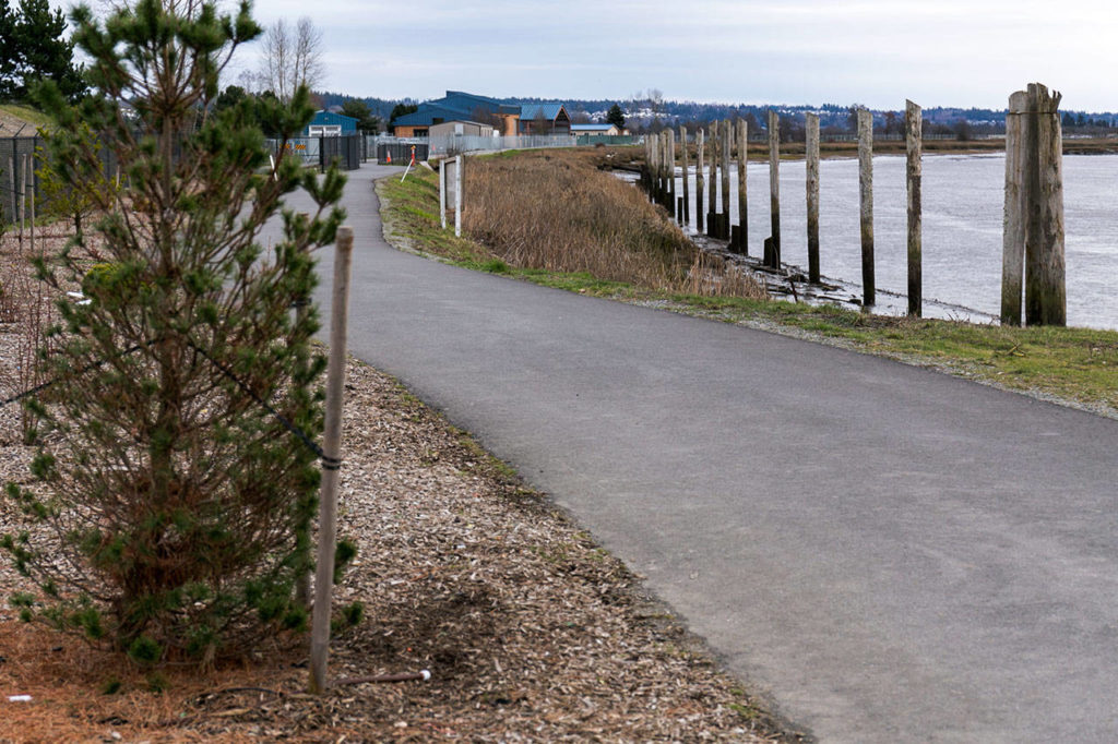 The Ebey Waterfront trail in the city of Marysville is part of two major trail expansion and connection projects, one on the popular waterfront trail and another connecting Bayview to the Centennial Trail near 84th St/Marysville Getchell High School. (Kevin Clark / The Daily Herald)
