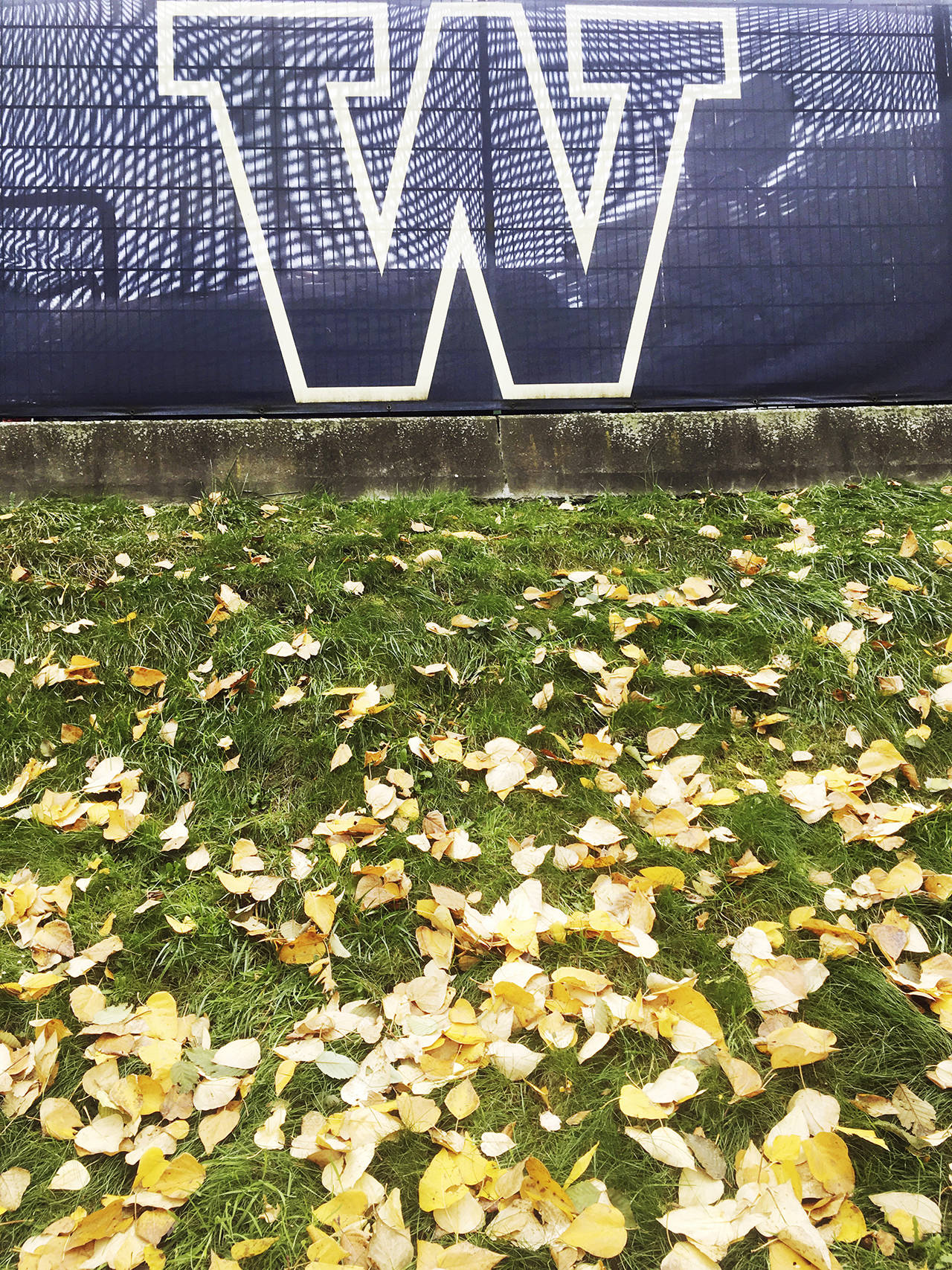 This photo shows the University of Washington campus in Seattle in the fall of 2017, when tuition was $218 cheaper. (Sue Misao / Herald file)