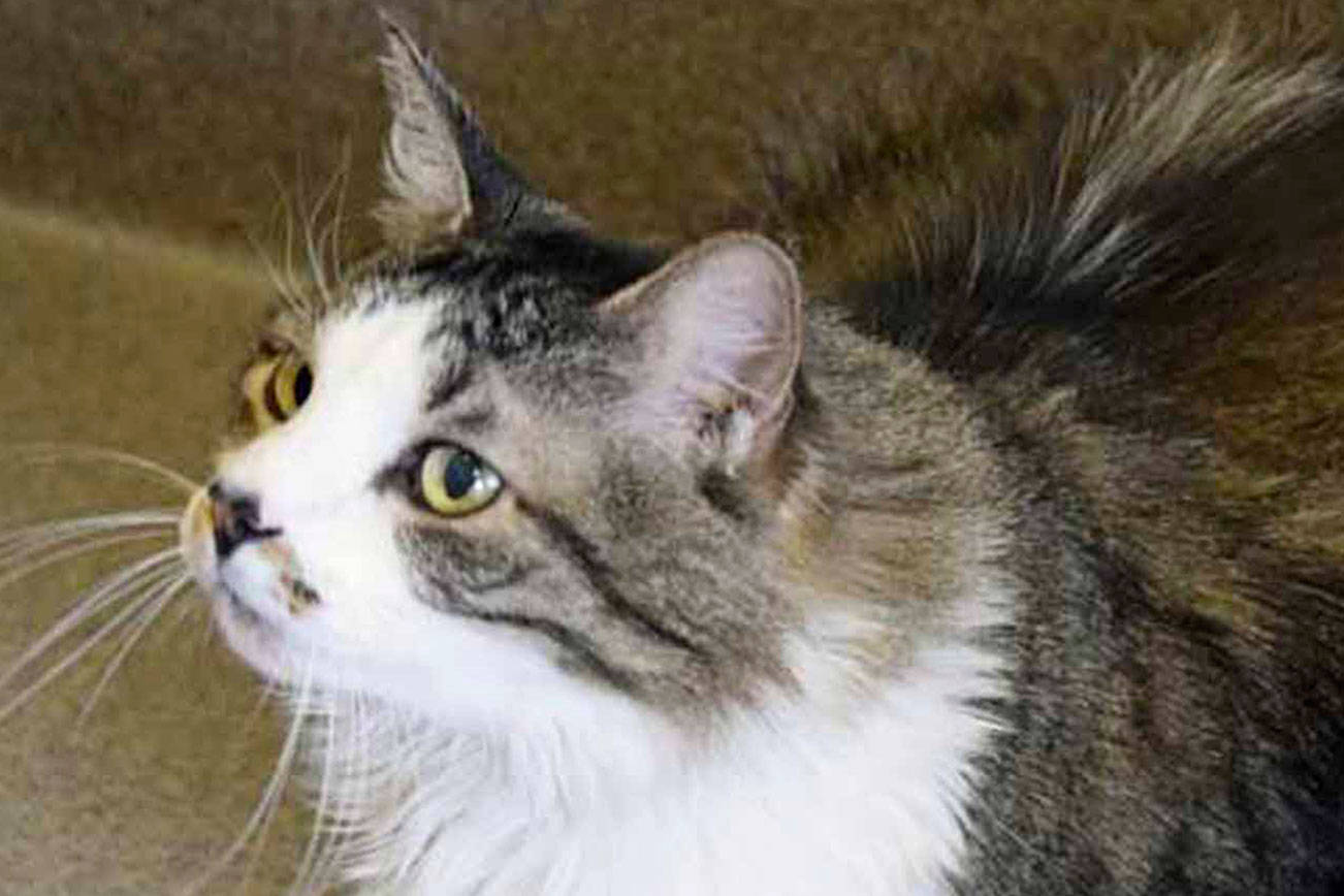 Five cats and a dog await for new homes from Everett Animal Shelter