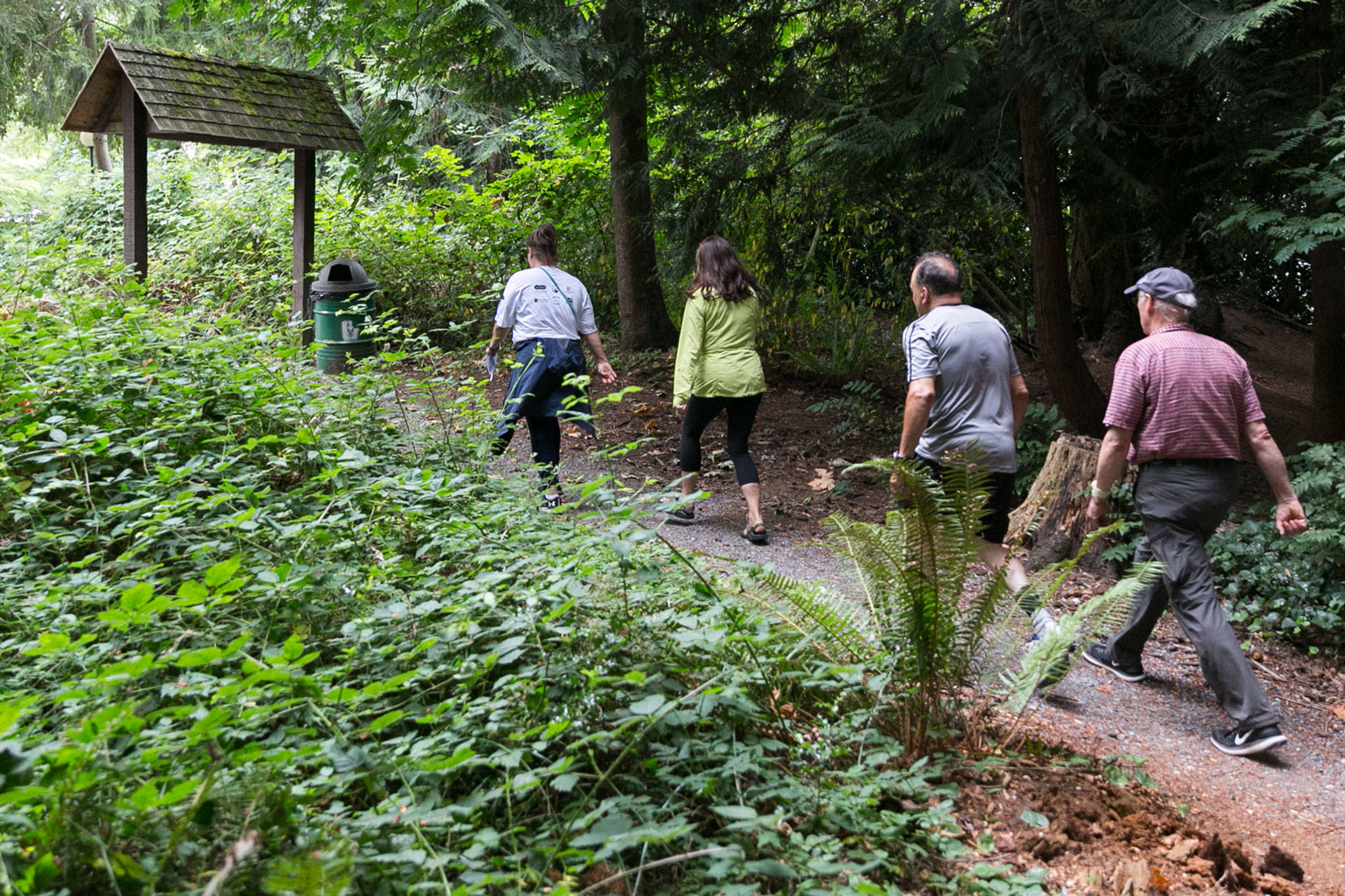Lynnwood's group of South County Walkers starts off from Lynnwood Recreation Center on Aug. 2. (Kevin Clark / The Herald)
