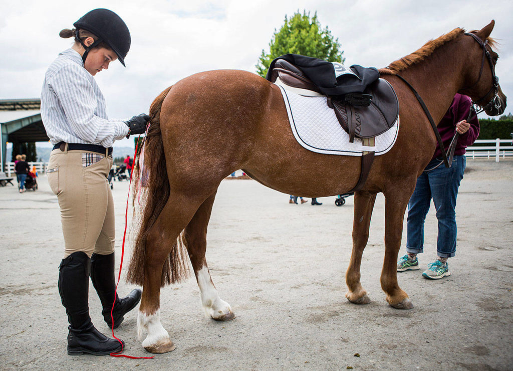 Lily Nebeker, 15, braids her horse Rem's tail with ribbon Thursday on opening day at the Evergreen State Fair in Monroe. (Olivia Vanni / The Herald)