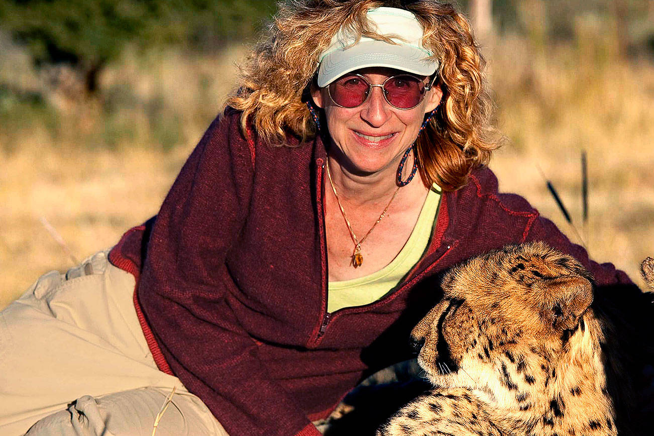 Naturalist Sy Montgomery, shown here with a cheetah in Namibia, is the featured author for the Everett Public Library's 2019 Everett Reads! program. She will offer two free events, including one for children, scheduled for Feb. 9 and Feb. 10. (Photo by Nic Bishop)