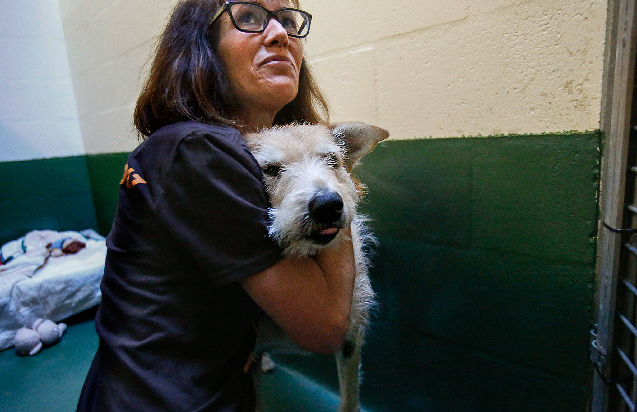 PAWS' Laura Follis embraces Sandy, a terrier mix that suffers from hair loss and other disorders. The nonprofit is the recipient of a gift of at least $500,000 from the estate of an Edmonds woman. (Dan Bates / Herald file)