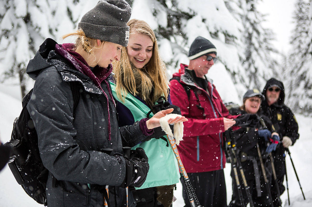 "Megan Manwill, left, and Sarah Manwill, right, hold a white ermine pelt during the ""Snowshoe with a Ranger"" program on the Pacific Crest Trail North on Saturday near Stevens Pass. (Olivia Vanni / The Herald)"