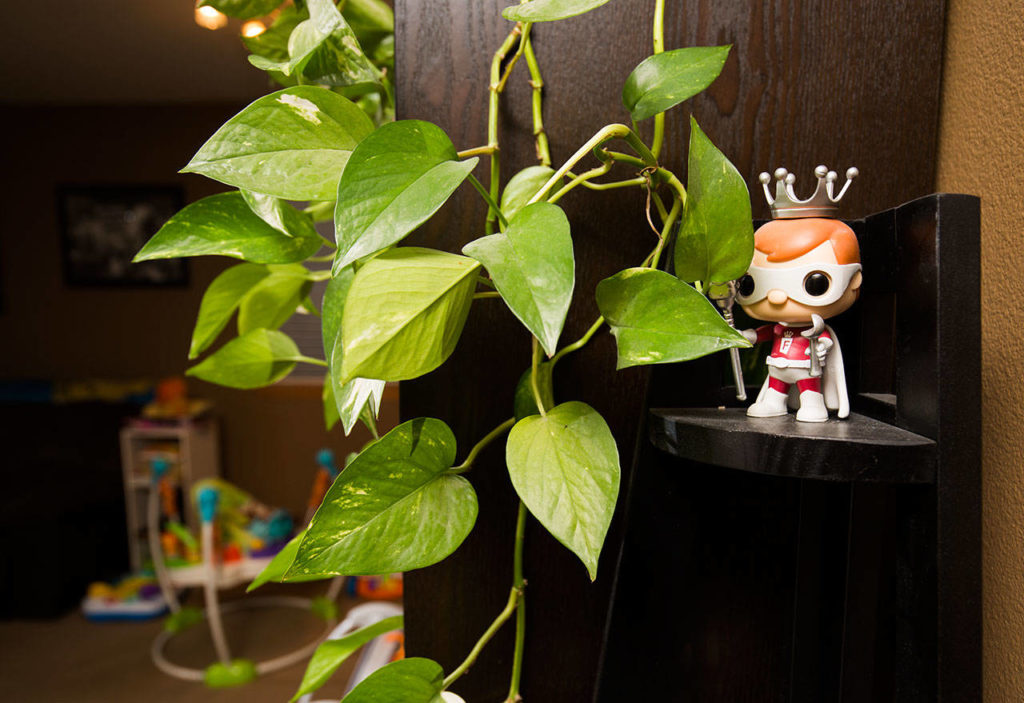 On a shelf behind a plant is one of the many Freddy Funko mascot figures found around the home of Diedre Twitty. (Andy Bronson / The Herald)