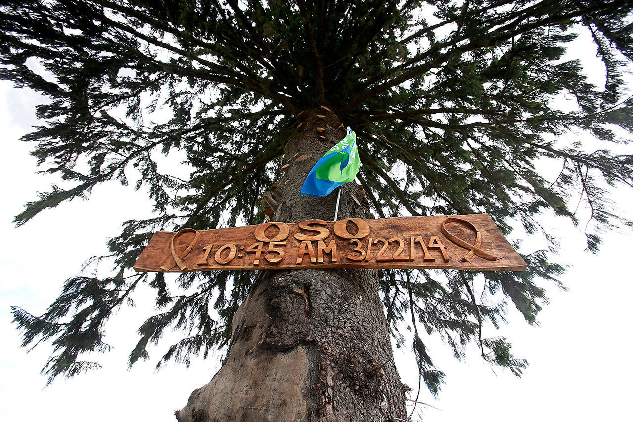 A Sitka spruce that withstood the mudslide bears a memorial sign made from a cedar plank retrieved from the debris. (Dan Bates / The Herald)