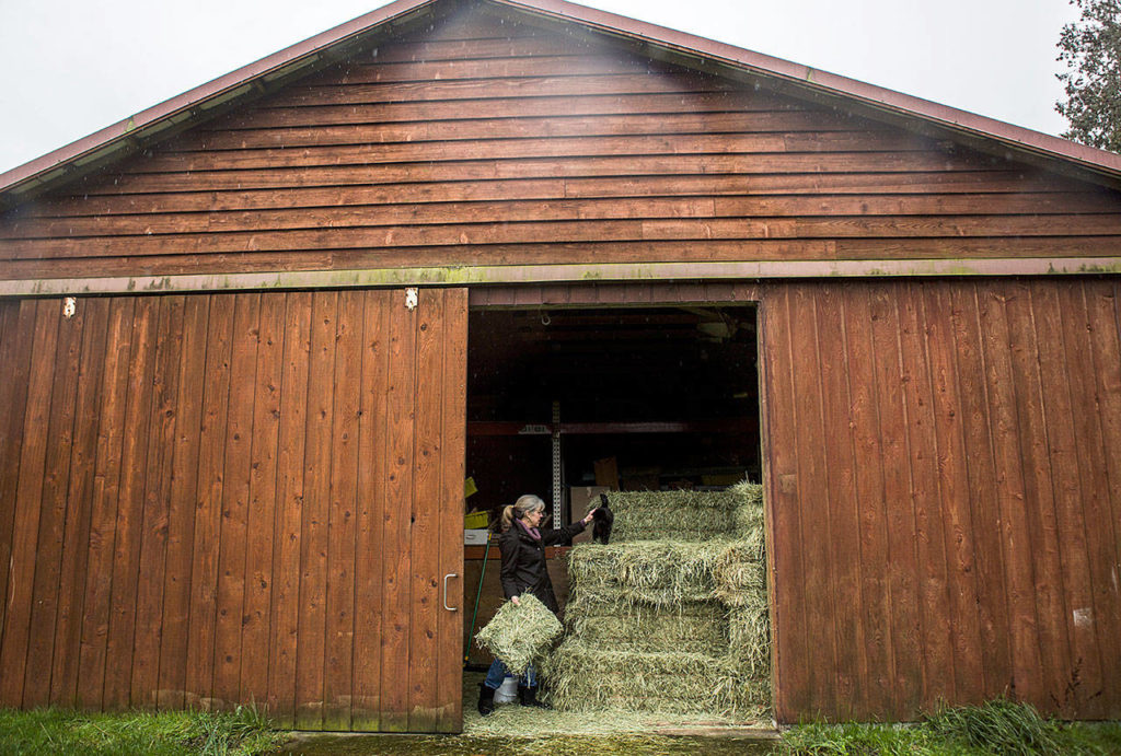 A working barn at Comforts of Whidbey in Langley. (Olivia Vanni/The Herald)