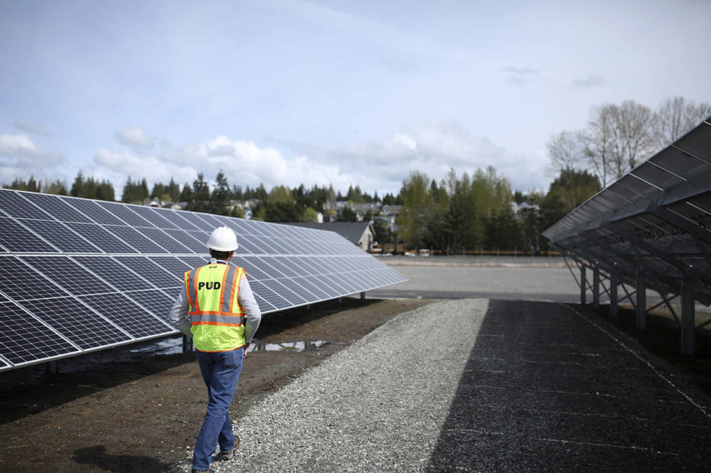 "Snohomish PUD employee Cayle Thompson walks through the 2-acre ""community solar"" project in Arlington Monday, April 15. (Julia-Grace Sanders/ The Herald)"