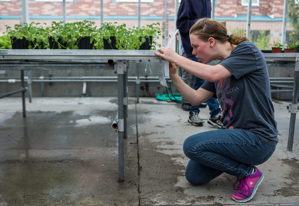 Student Kayla Kraus fills out an order form at the Functional Life Academics plant sale at Kamiak High School. (Olivia Vanni / The Herald)