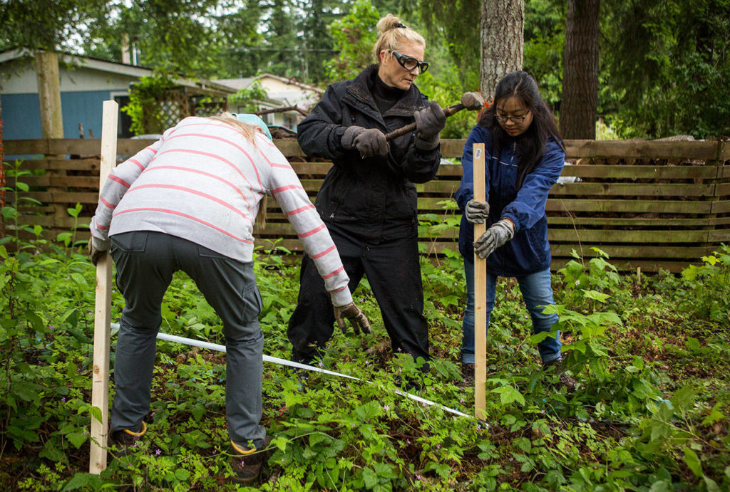 Jen Buell (center), with help from Stephanie Lam (right), hammers a stake in the ground for a fence during a Habitat for Humanity build on Saturday in Gold Bar. (Olivia Vanni / The Herald)