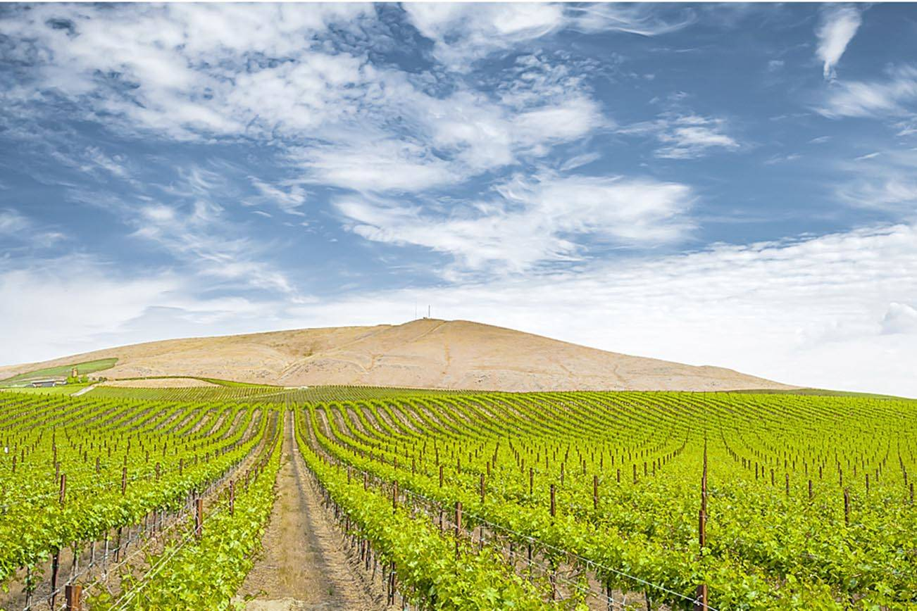 Red Mountain AVA remains a gold mine for wine contest awards