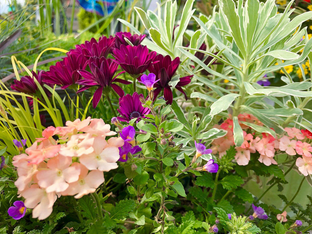 With long days and mild weather, June is an ideal month to plant summer color. (Nicole Phillips)