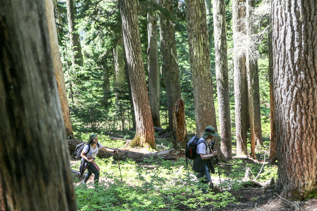 Rich Schleifer, followed by his daughter Hinako, 13, hike the Mount Margaret trail in search of geocaches. (Kevin Clark / The Herald)