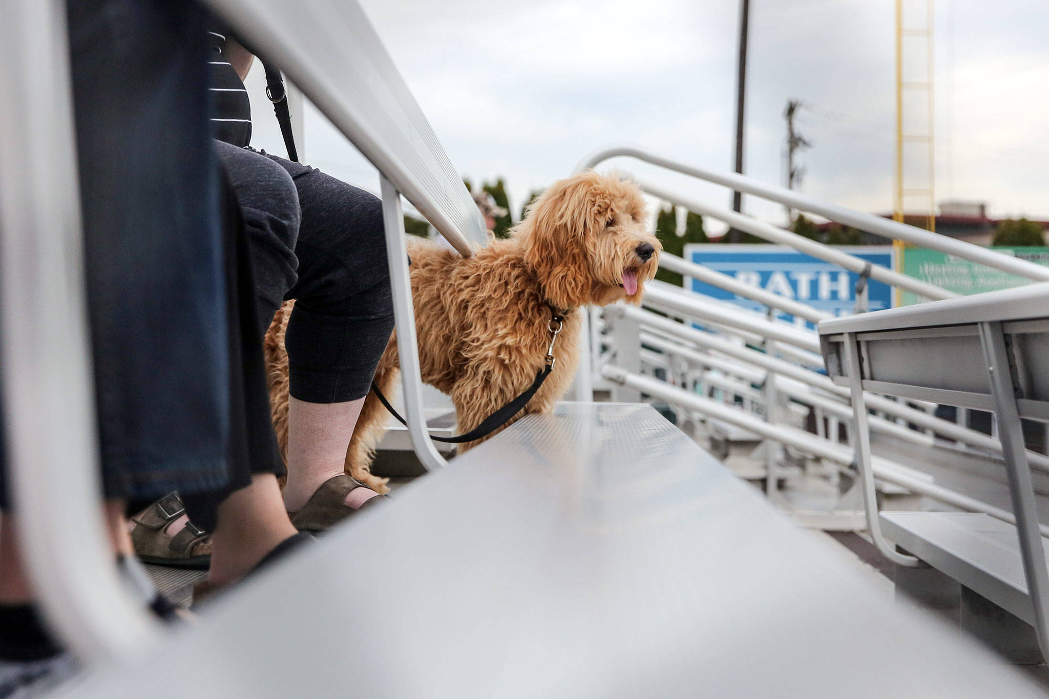 Dogs are welcomed to the AquaSox game Tuesday evening as part of Bark in the Park 2 at Funko Field at Everett Memorial Stadium in Everett on August 20, 2019. (Kevin Clark / The Herald)