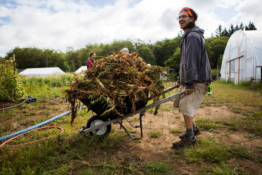 Cooper Gillen hauls a load of brush across a field at the Organic Farm School in Langley. (Olivia Vanni / The Herald)