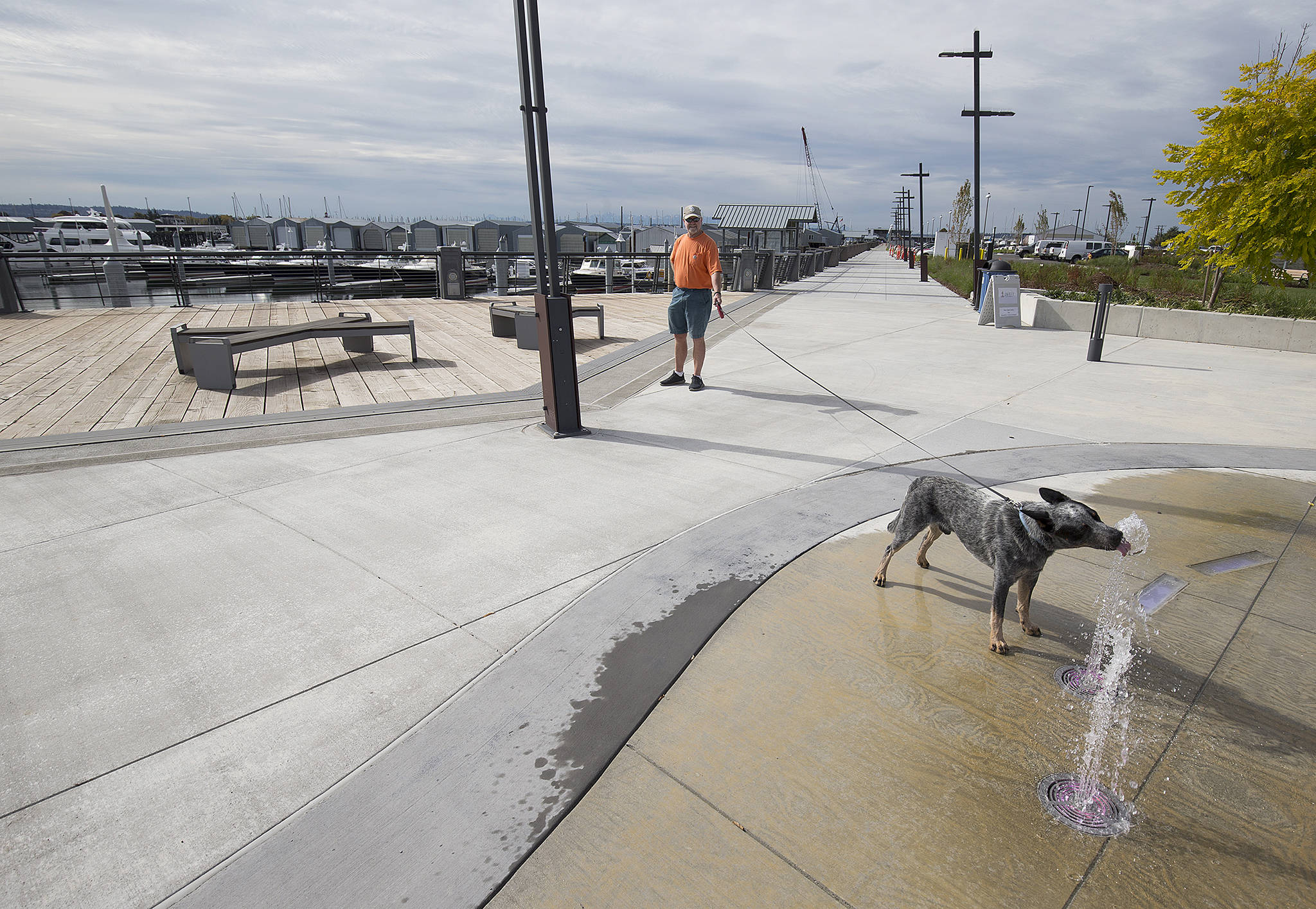 Pepper takes a drink from the new water fountain display while on a walk with his owner, Mike Williams, at the Port of Everett on Wednesday in Everett. The Boats Afloat Show, which has been held on Seattle's South Lake Union for some 30 years, is relocating to the Port of Everett next fall. (Andy Bronson / The Herald)