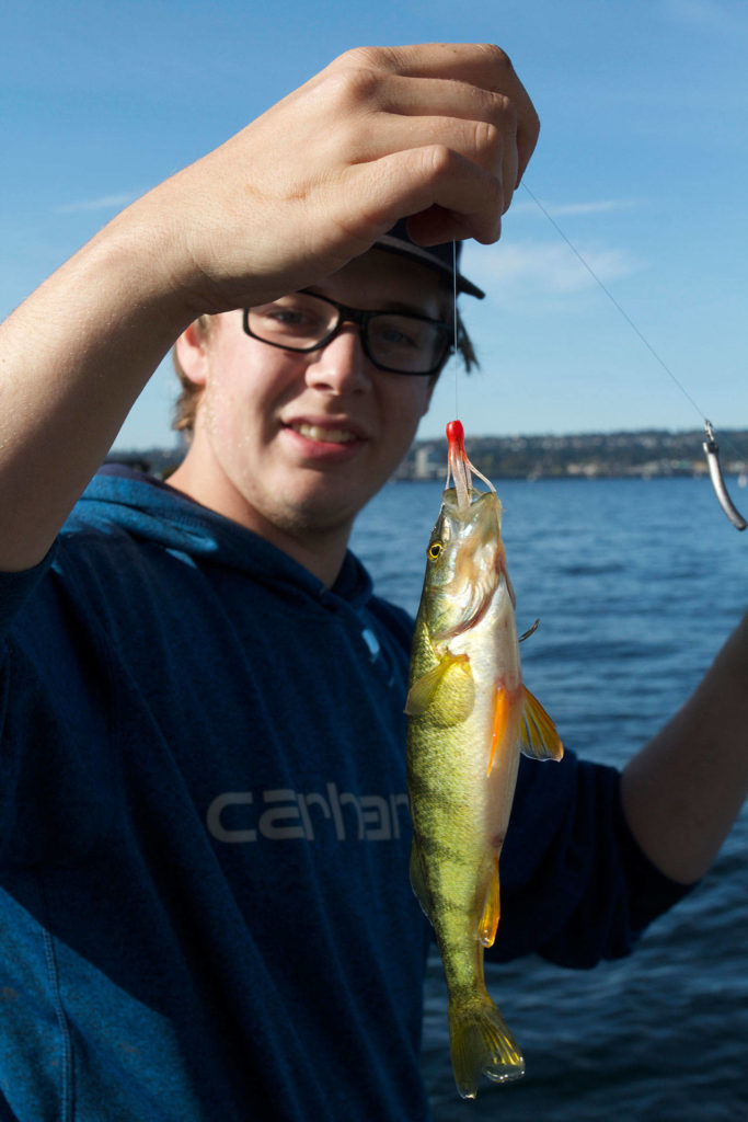 Spencer Haug displays a nice perch that grabbed his crappie jig. (Mike Benbow photo)