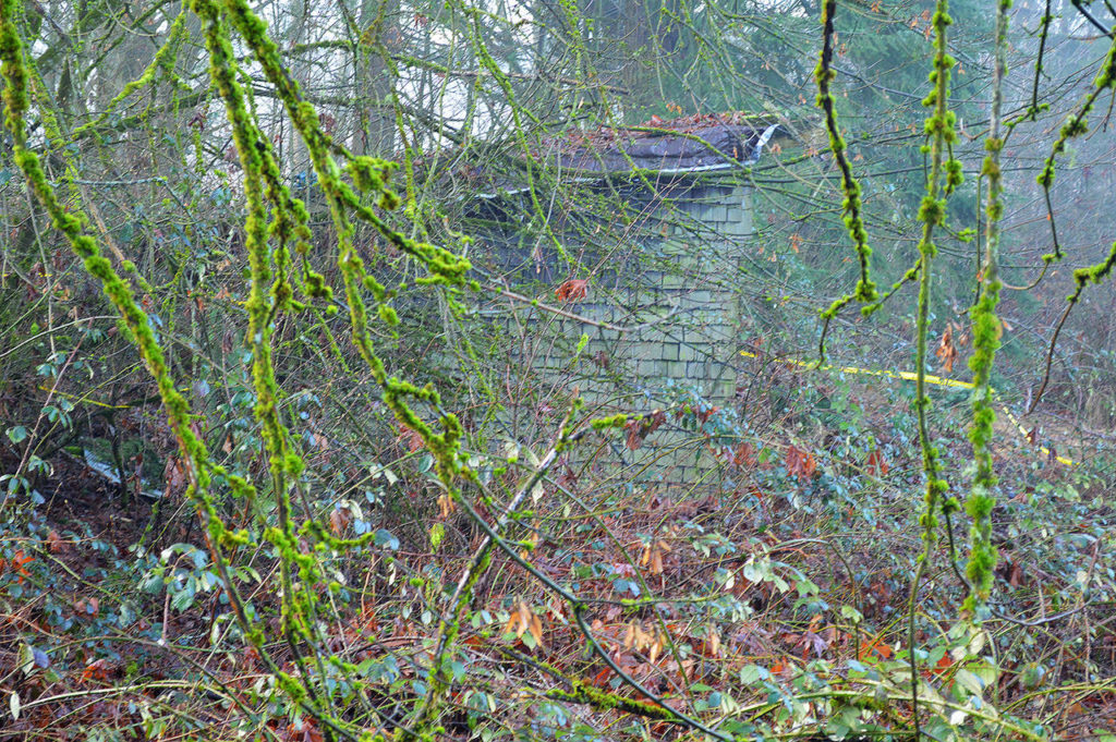 "Brambles covered the shed by the time the body of Nathaniel ""Terry"" Deggs was found in 2015. (Snohomish County Medical Examiner's Office)"