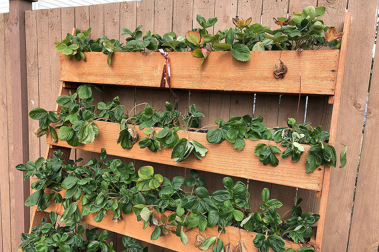 Gardening trends for the next decade (or at least the new year)