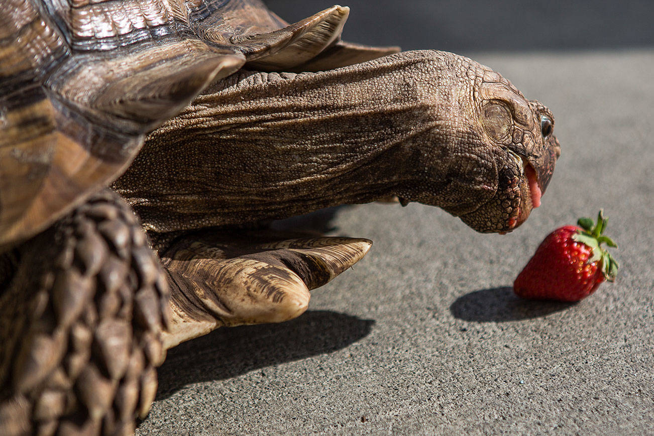 Turtle power! The pet shop where this tortoise lives is open