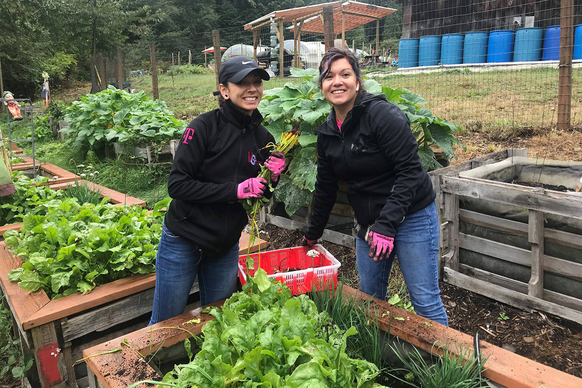 Zsofia Pasztor, founder of Woodinville-based non-profit Farmer Frog, is a certified horticulturist, arborist and landscape designer who helps build community and family gardens, starting from a foundation of Cedar Grove soil and compost.