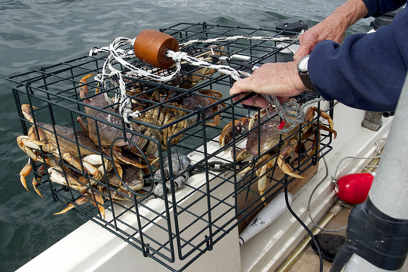 Check the tides and watch your pots as crabbing season opens