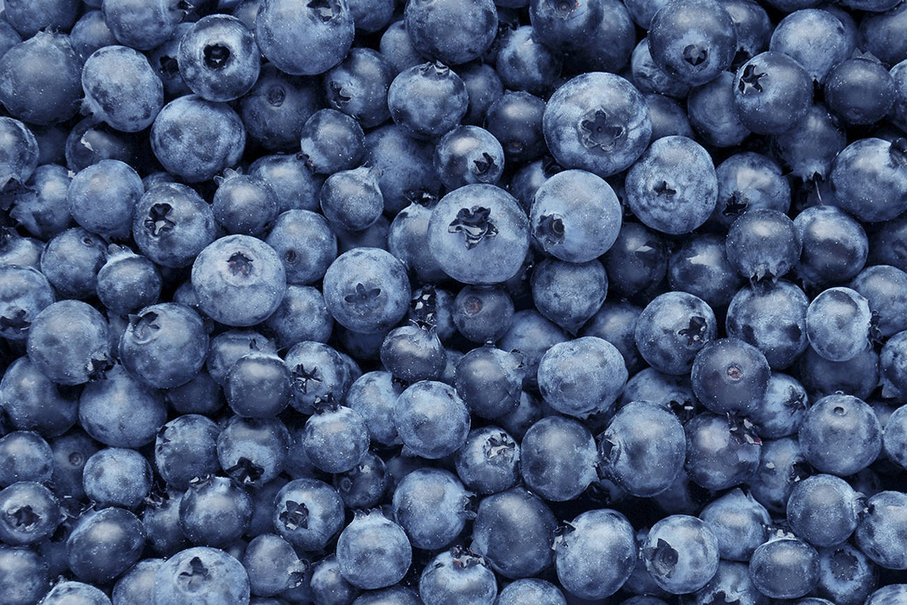 The Snohomish County Fruit Society is hosting a webinar on blueberries Sept. 10 via Zoom. (Getty Images)