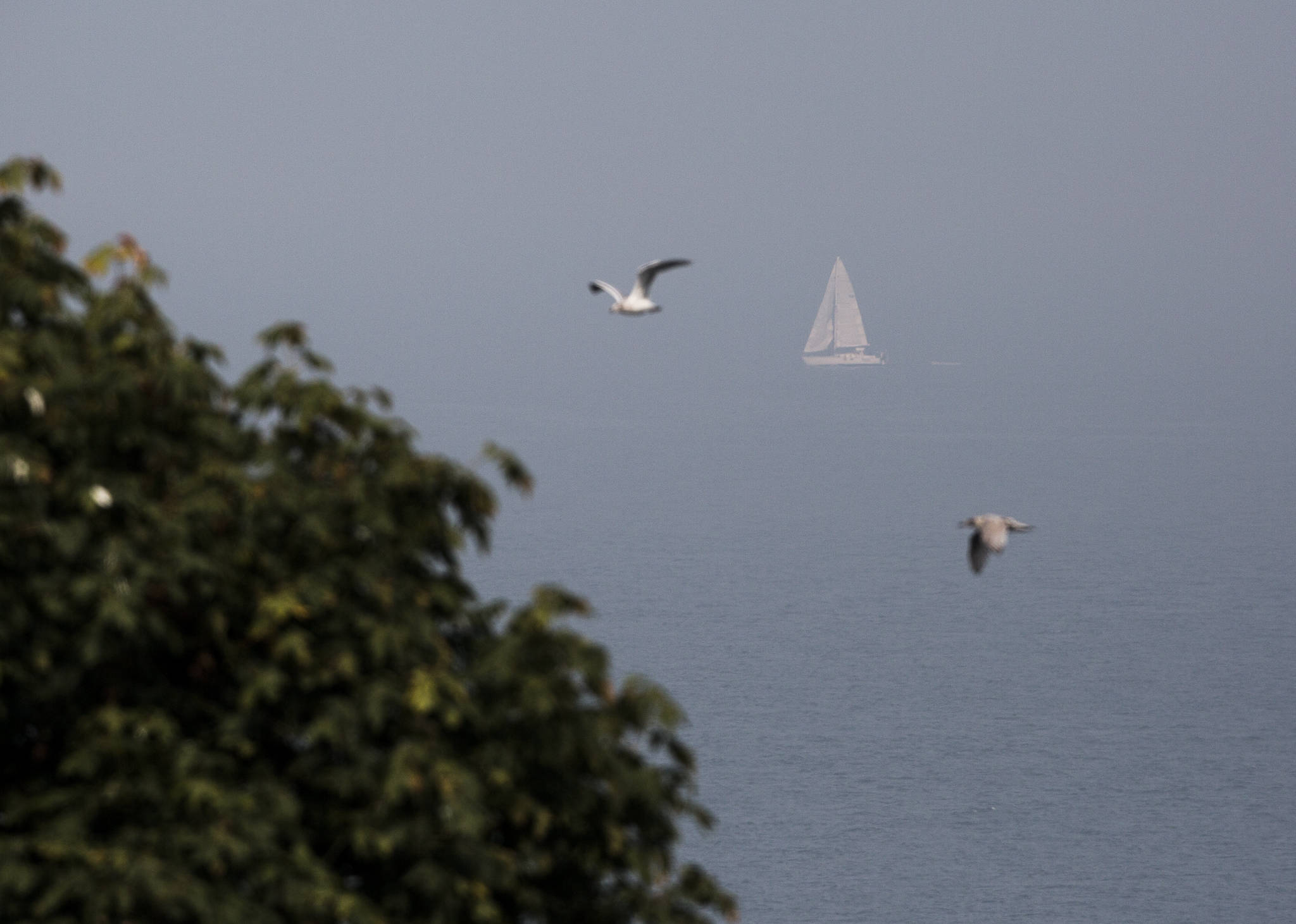 A sailboat navigates its way through the smoke on Possession Sound on Friday, Sept. 11, 2020 in Everett, Wa. (Olivia Vanni / The Herald)