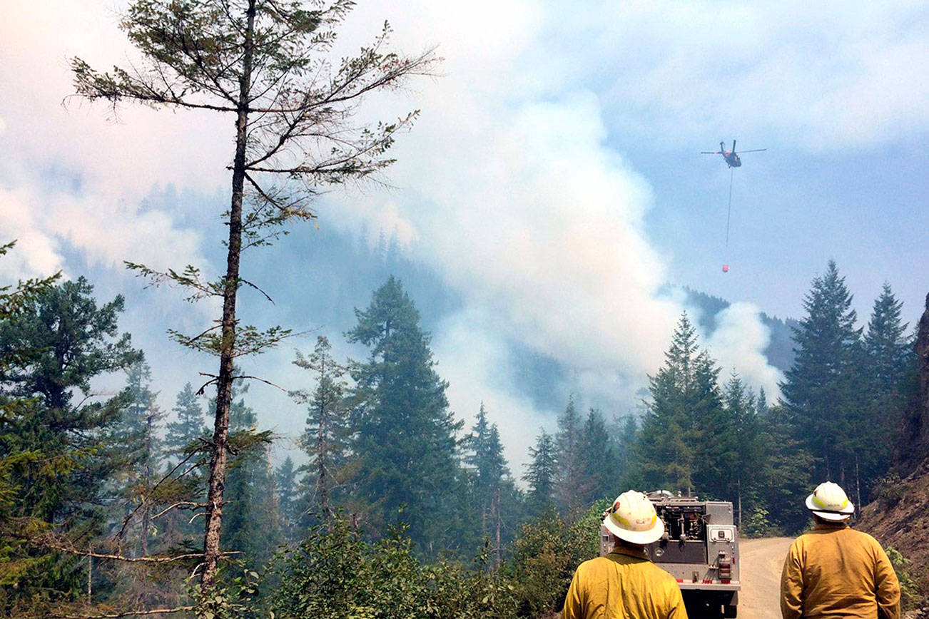 Poacher burned bees nest in tree, started 3,300-acre wildfire