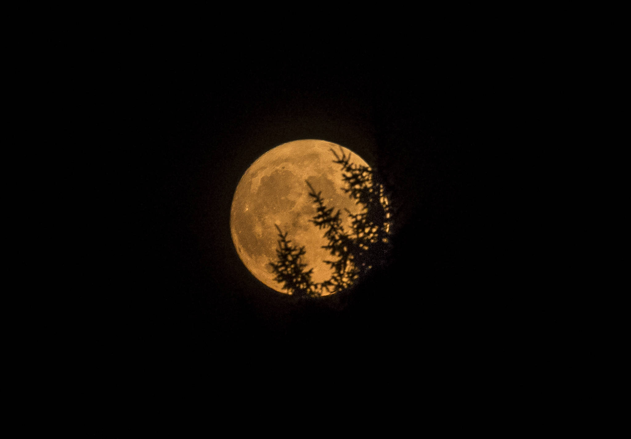 The moon rises over Everett on Wednesday, tinged yellow from high elevation smoke. (Olivia Vanni / The Herald)