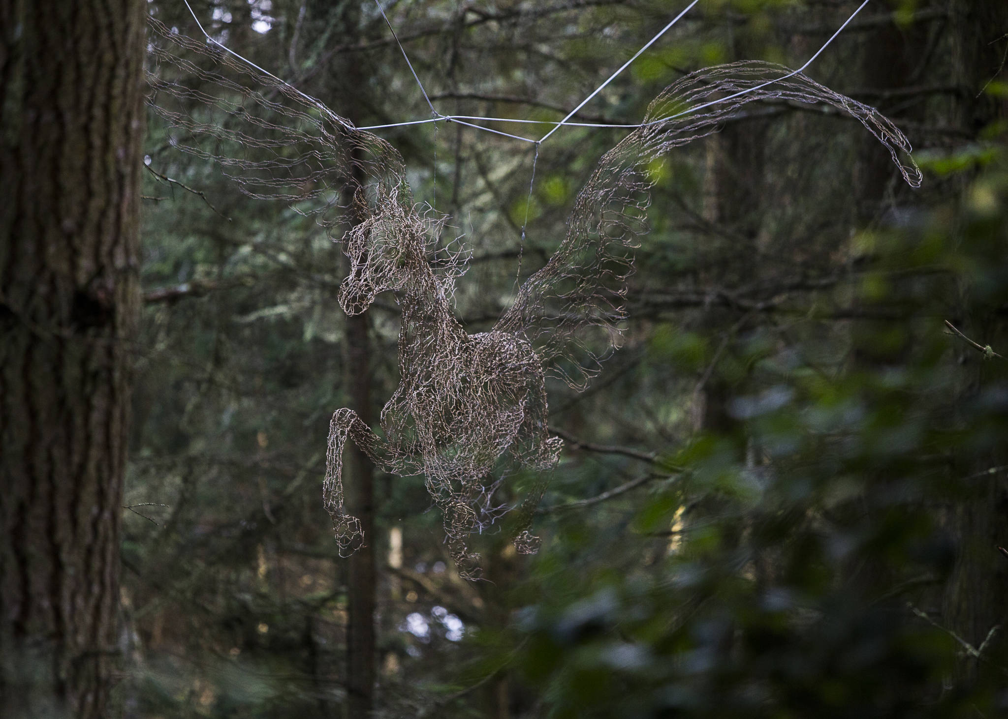 """Elizabeth Berrien's """"Pegasus"""" — which was hung in the trees with the help of Shaun Sears, star of the Animal Planet TV show """"Treetop Cat Rescue"""" — is on display in the new Price Sculpture Forest in Coupeville. (Olivia Vanni / The Herald)"""