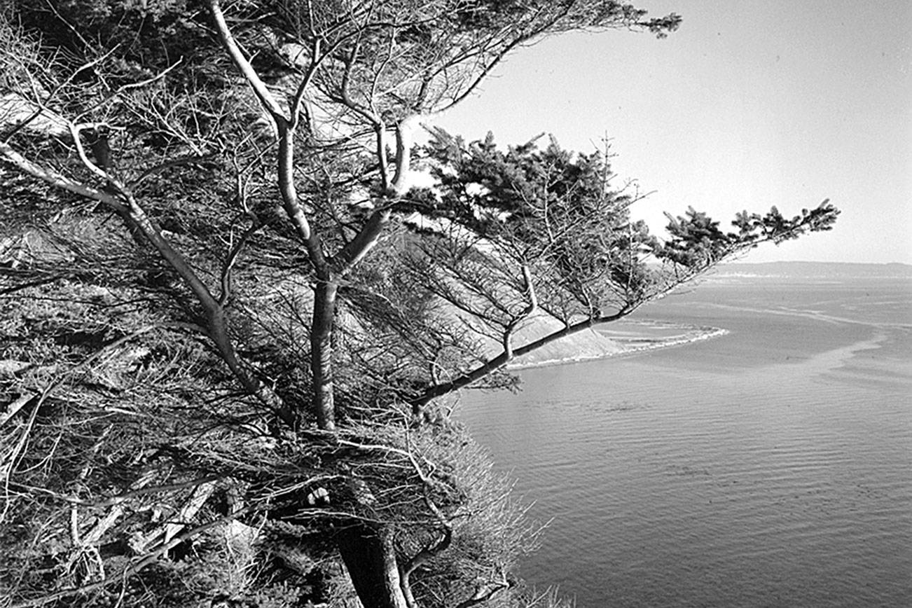 """John Olsen's photographs, including """"Vista Bluff Tree,"""" will be on display at Penn Cove Gallery in Coupeville through February."""