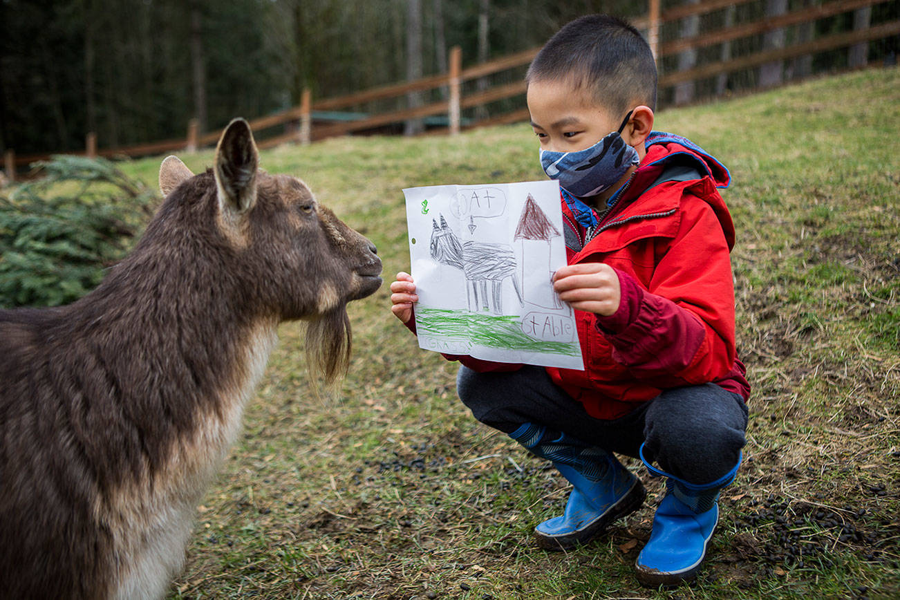 Riley Wong, 7, shows his pen pal, Smudge, the picture he drew for her in addition to his letter at Pasado's Safe Haven on Friday, Feb. 19, 2021 in Monroe, Wa. (Olivia Vanni / The Herald)