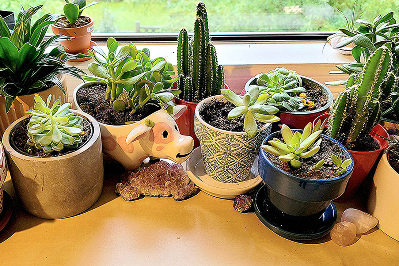 Can houseplants make you happy? We think so. (Jennifer Bardsley)