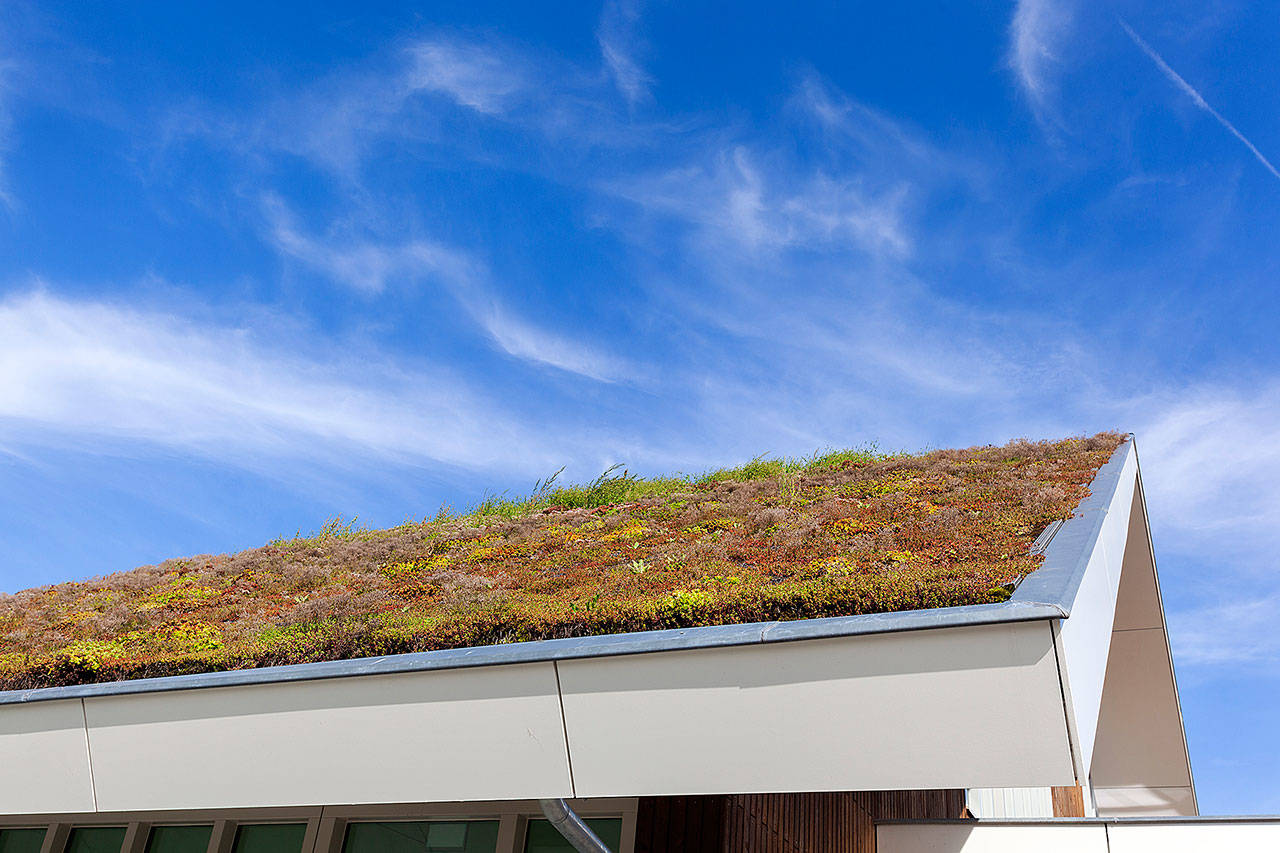 "The Camano Wildlife Habitat Project is hosting a ""Living With a Green Roof"" webinar on March 17 via Zoom. (Getty Images)"