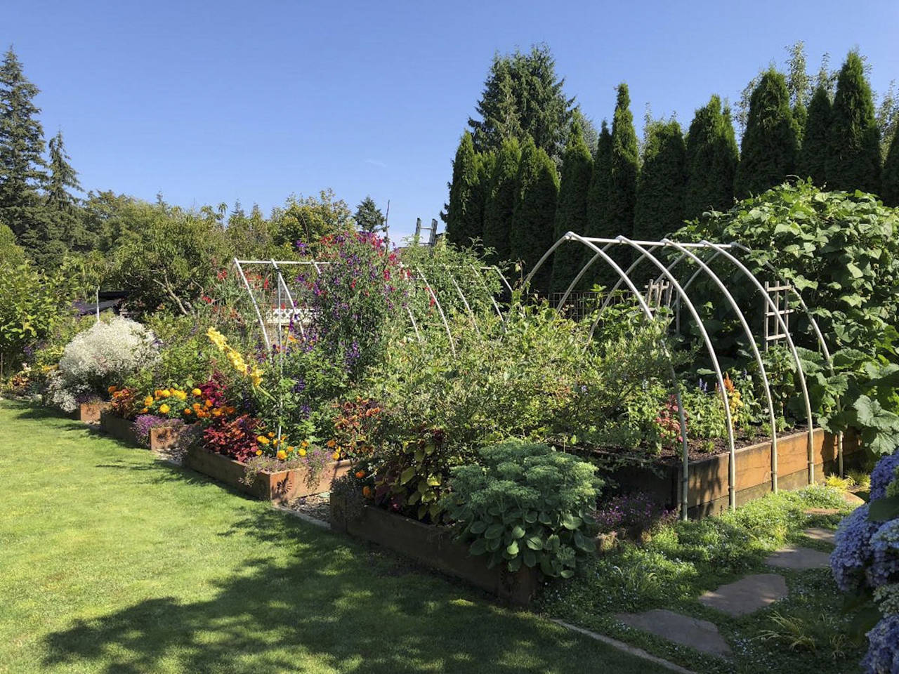 If you decide to add raised beds to your garden, the dimensions should be at least 10 to 12 inches high and no more than 4 to 5 feet wide. The length is up to you and your available space. (Nicole Phillips)