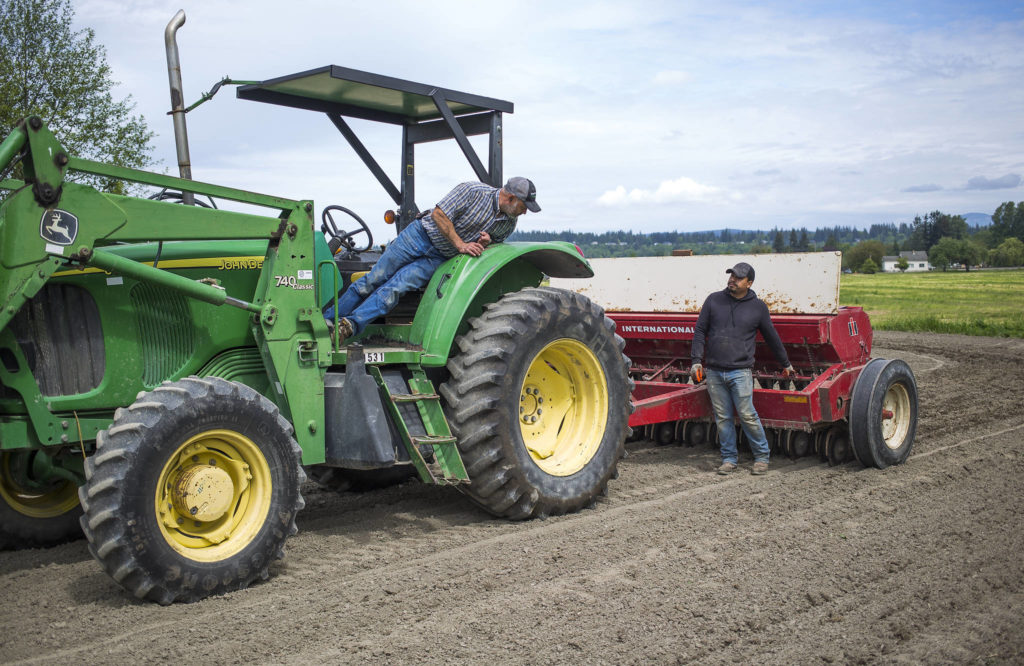 After making one row, Spencer Fuentes (left) looks back as he and Juan Martinez line up a grain drill before starting a second row while planting black beans May 12, 2021 in Arlington. (Andy Bronson / The Herald)