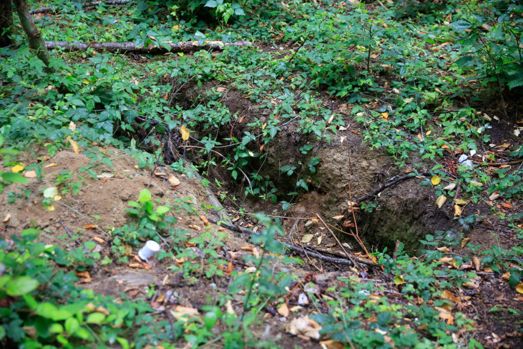 The shallow grave of the McCollum Park John Doe was found Sept. 26, 2020, by a transient living in a greenbelt in Mill Creek. (Kevin Clark / The Herald)